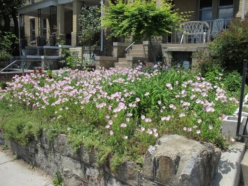 Galería de la mala hierba de New Jersey: Hogar, césped, & amp; Jardín