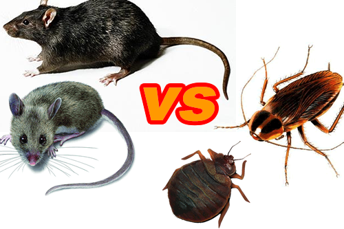 Bed Bug Droppings V Roach Droppings