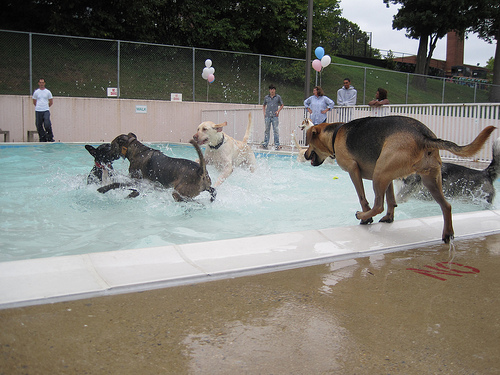 Popville More Info On Doggie Day Swim This Sat At Upshur And Francis Pools