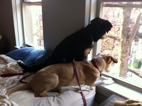 Summer & Pax Squirrel Hunting from the Window