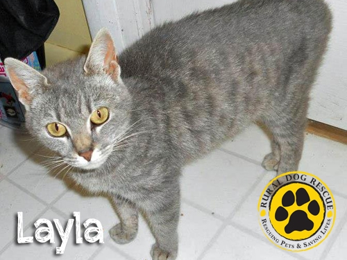 Layla - Rural Dog Rescue