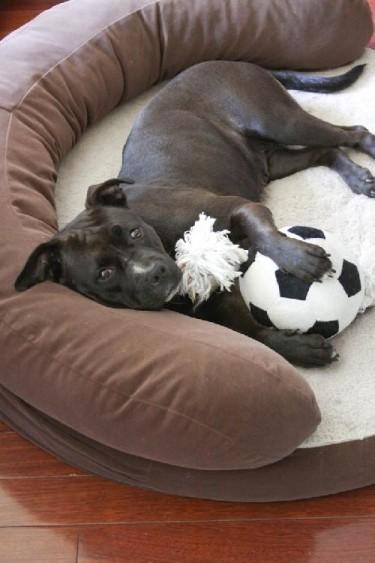Mary - Lucky Dog