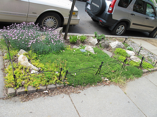columbia_heights_curb_garden