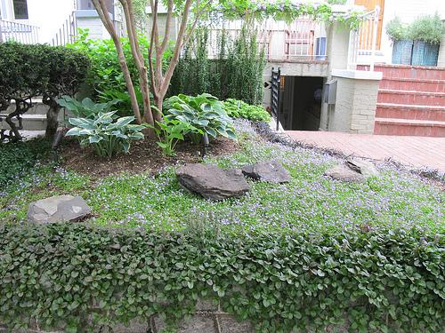 green_garden_mt_pleasant