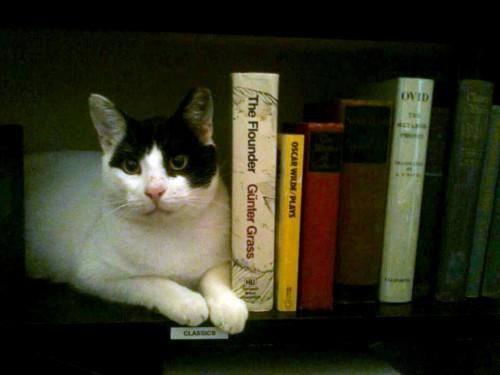 sphynx_books