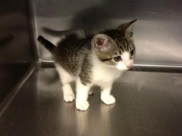 stolen_kitten