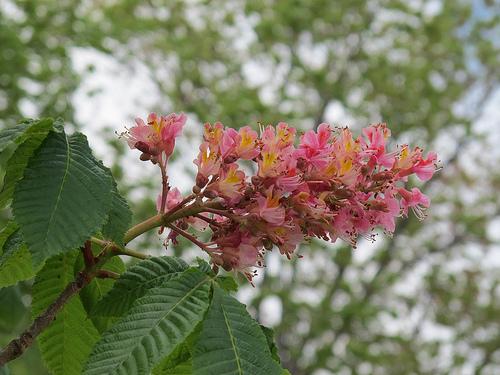tree_flowers