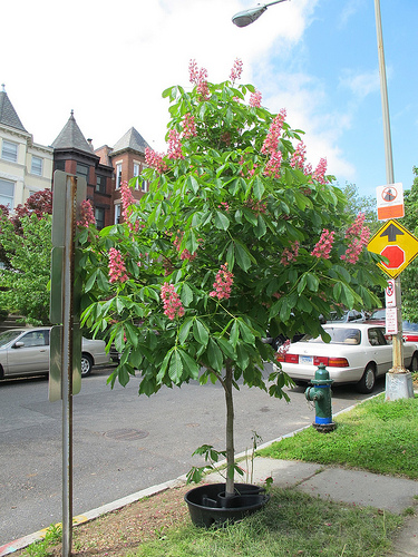 tree_popville_curb_columbia_heights