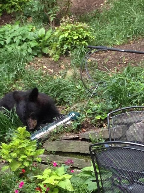 bear_sighting_dc