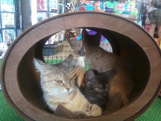 Momma Cass & Kittens - Tails High
