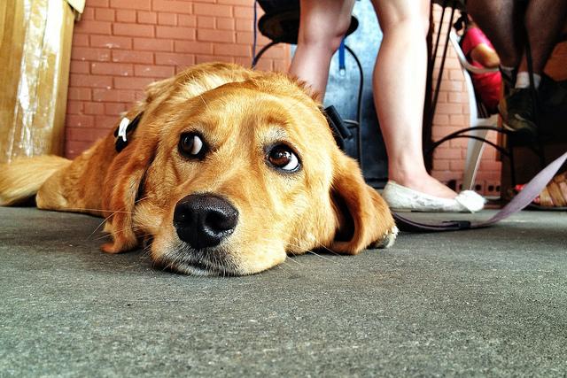 dog_costs_dc