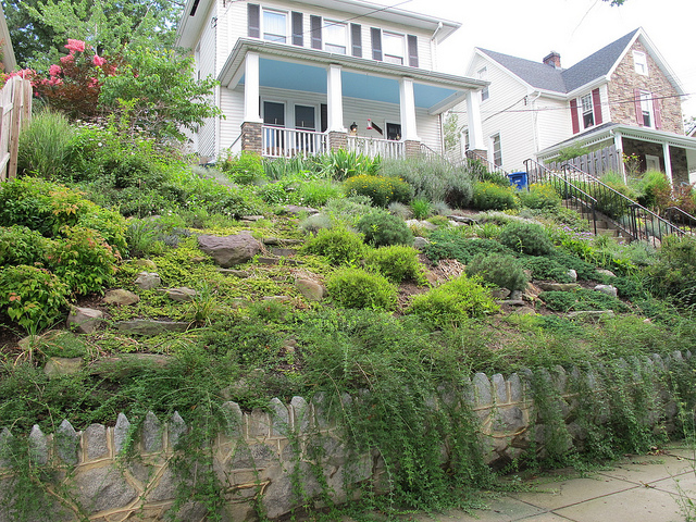Landscaping Forest Hill Md : Garden of the day popville