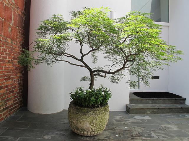 tree_georgetown