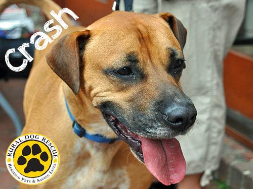 Crash - Rural Dog Rescue