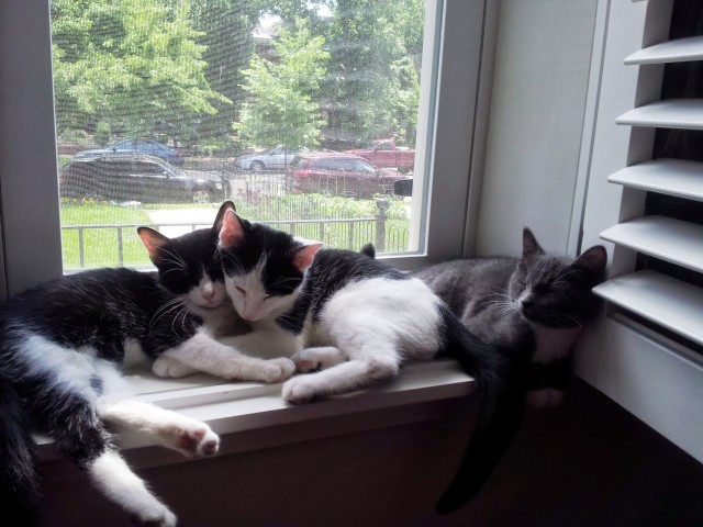 kittens in windowsill2