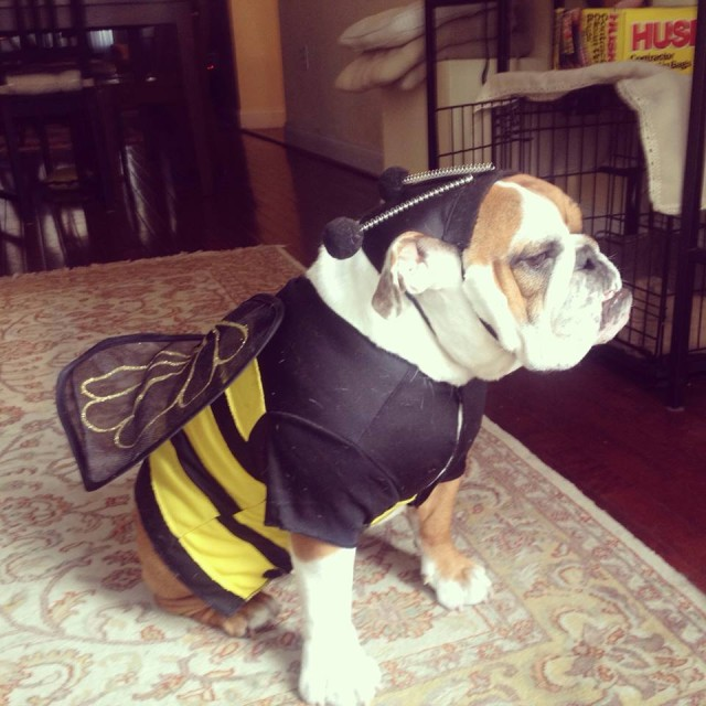 Bruno bee costume