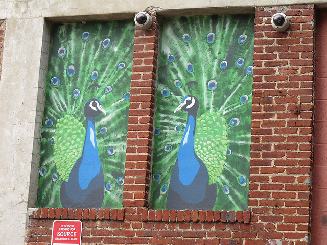 peacock_mural