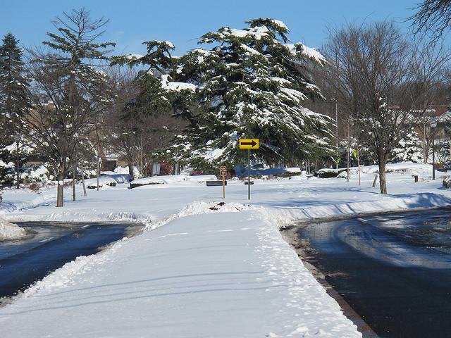Grant_circle_tree_snow