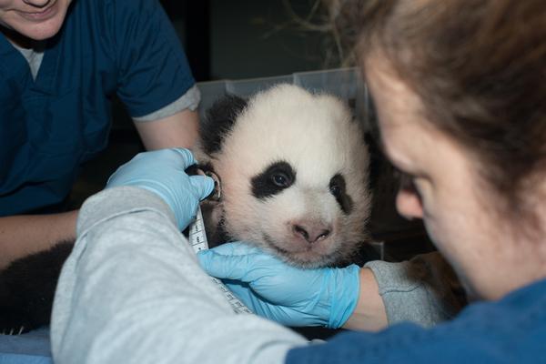 Baby Panda 11/22/2013