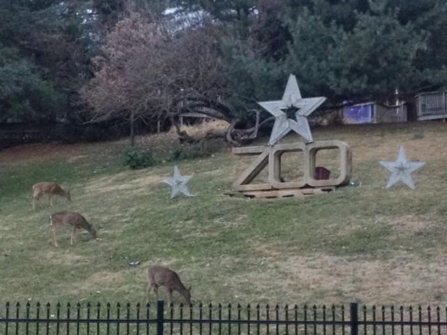 Zoo Deer 1