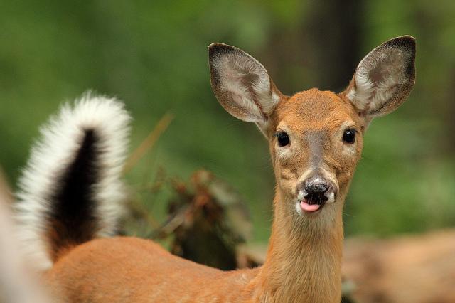 deer_sharpshooters_dc