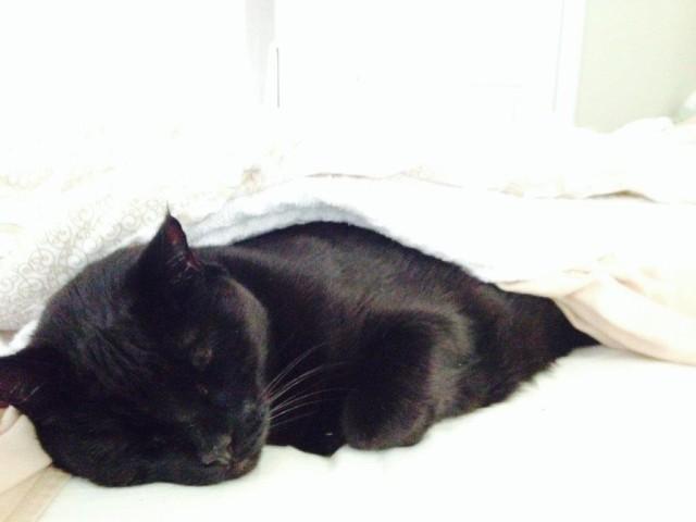 Clytie napping IMG_9455