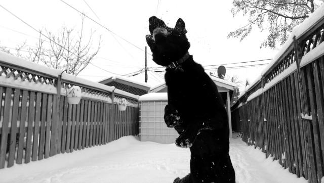 melpomene-in-snow-gsd-zoeicaimages-01