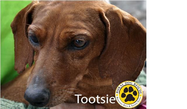 Adoptable Adult Dog Breeder