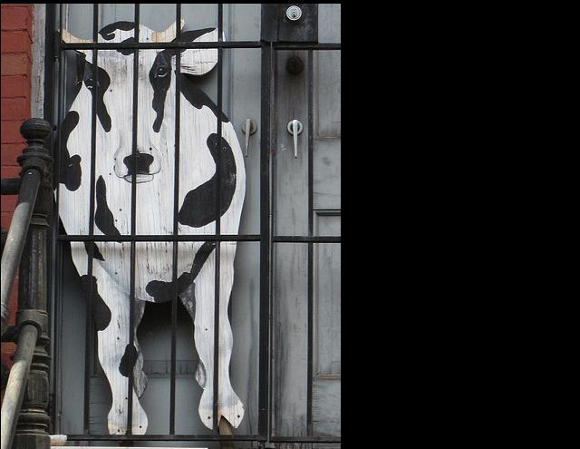 cow_door_closeup