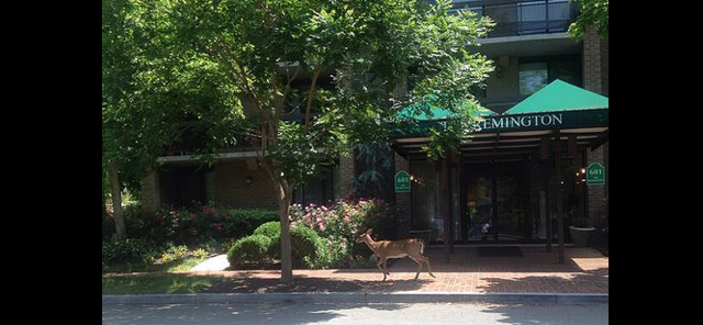 deer_downtown