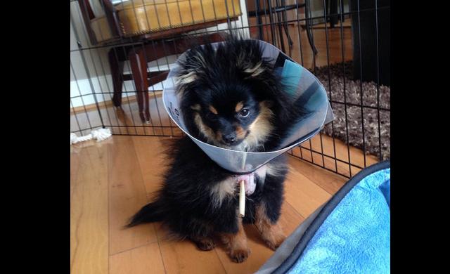 injured_pup