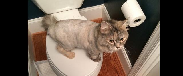 bathroom_cat