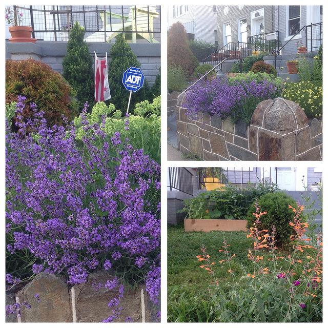 garden_brightwood