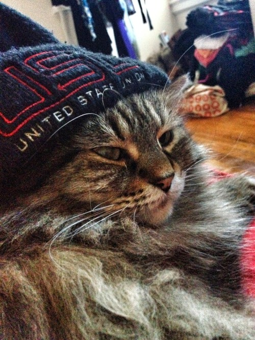 union thug cat