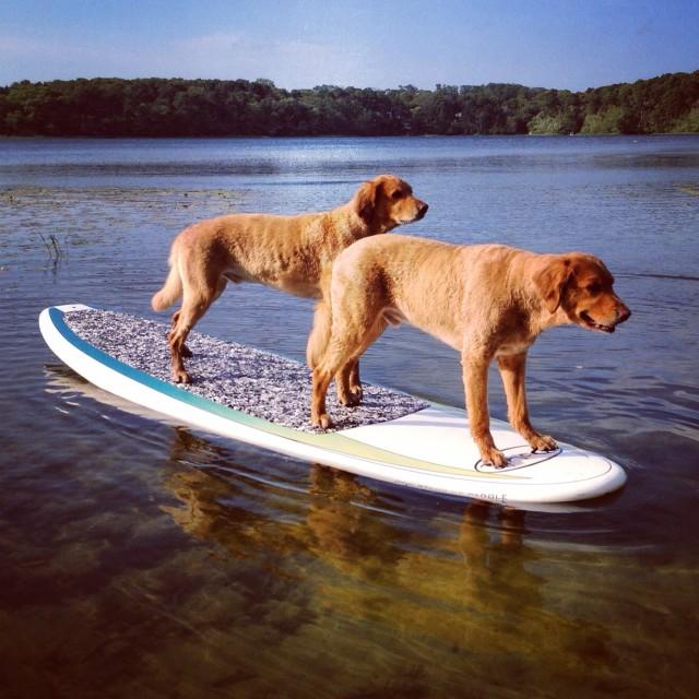 CapeCod-SUP Pups-2014