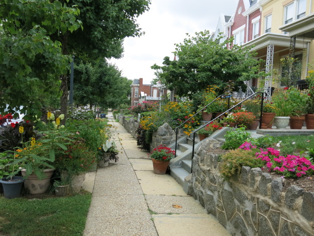 Garden Of The Day Popville