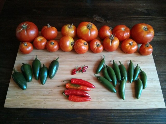 Petworth garden haul