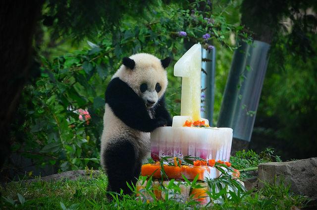 bao_bao_birthday