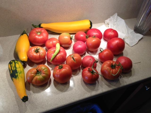 tomato photo