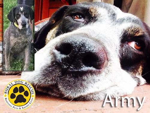 Army - Rural Dog