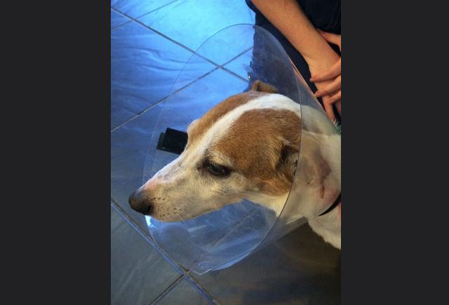 injured_dog