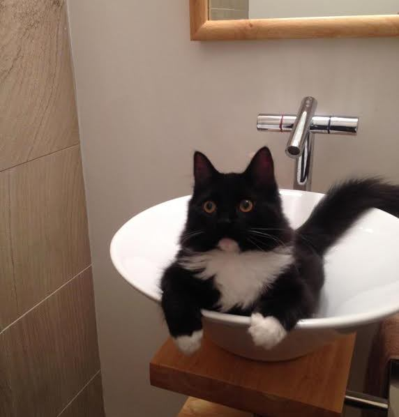 Lincoln Sink Kitty