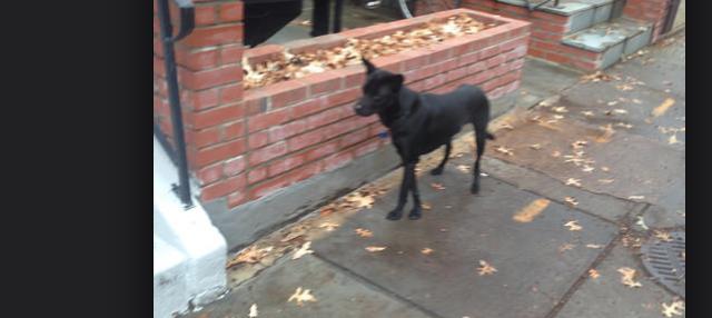 found_dog