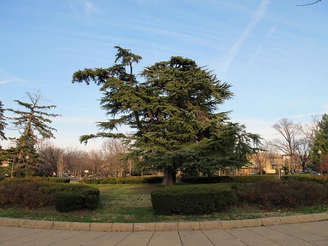 grant_circle_tree_2007-copy-2