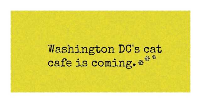 cat_cafe_dc-lawyer