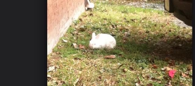 lost_bunny