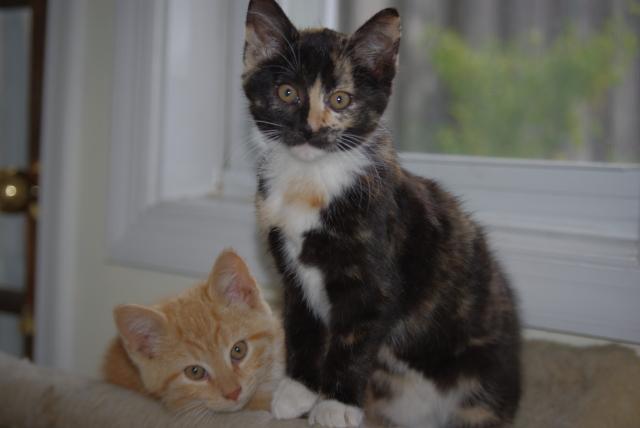 Mariachi and Lupita