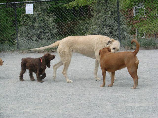 Pat & Lizzie Wolfhound