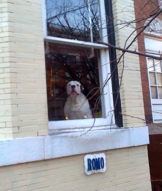 Romo is Back on Calvert Street, NW Washington-20150120-00139
