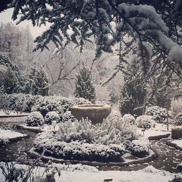 dc_snow